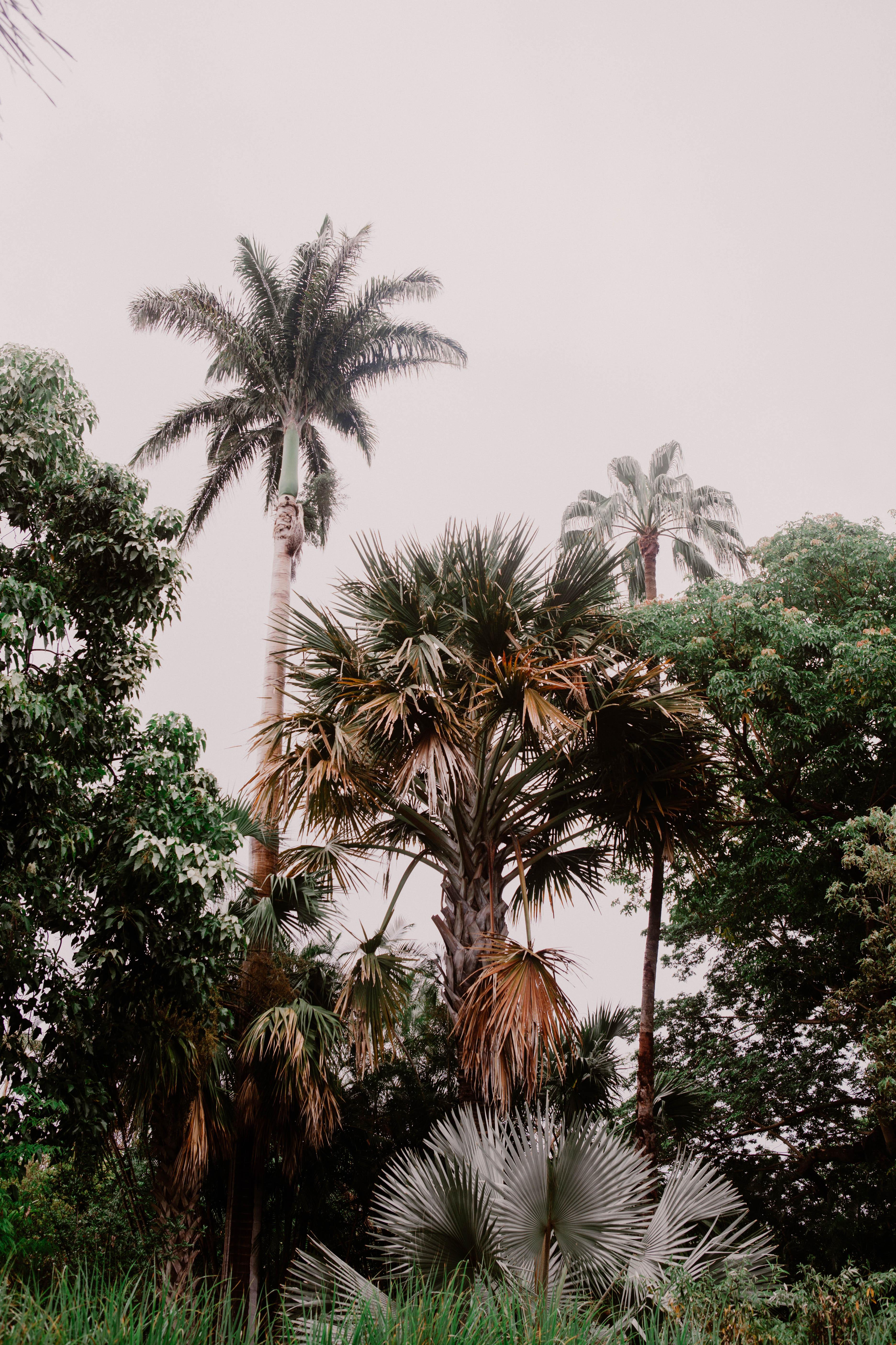 photographe lyon, photographe voyage, photographe Réunion, voyage, paysage, landscape, photo voyage, photo réunion, travel, piton de la fournaise, saint gilles les bains, Cascade de Cormoran, jardin d'éden